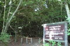 Лес Аокигахара1