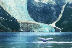 princess-cruises-humpaback-whale-in-alaska