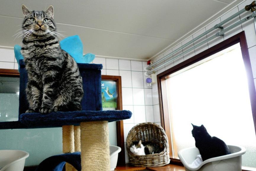 Кошачий приют в Амстердаме.