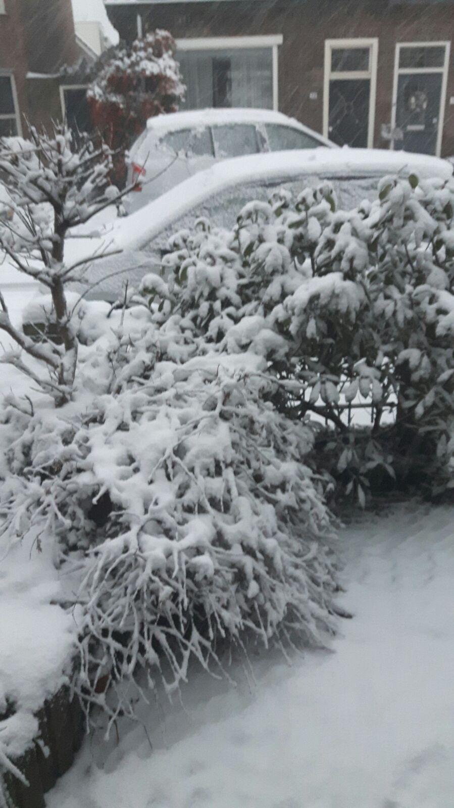 Зима в Голландии. 2017г.